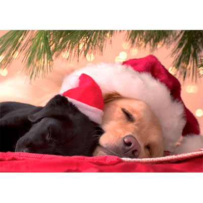 christmas snooze christmas card