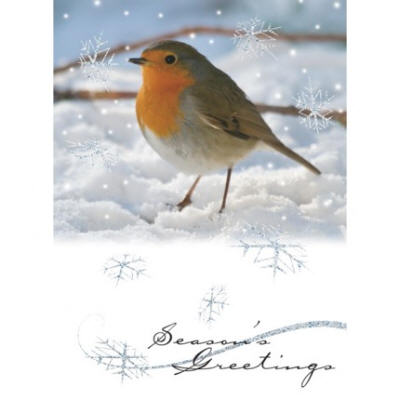 red red robin christmas card